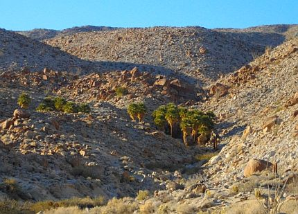 The North Grove on the trail of palm groves. A true desert oasis!